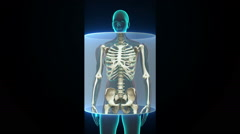 Zooming Female body and scanning  Human skeletal structure, bone system. HD. Stock Footage