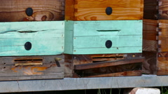 Beehives with honeycomb frames Stock Footage