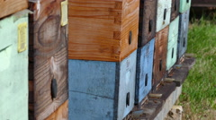 Beehives with honeybees in the meadow Stock Footage