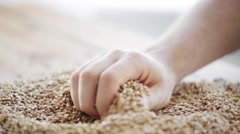 Male farmers hand pouring malt or cereal grains Stock Footage