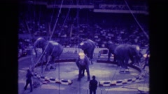 1974: group of four elephants dancing in a circle in front of a crowd  Stock Footage