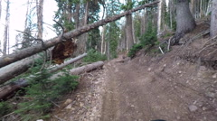 Fallen timber forest recreation ride 4x4 POV HD Stock Footage