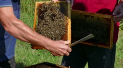Beehive with a swarm of bees Stock Footage