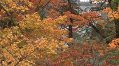 Autumn fall colors in Toronto don valley Stock Footage