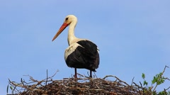 Closeup of White Stork in Nest Stock Footage