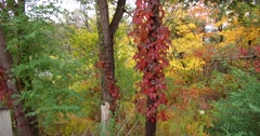 Autumn fall colors in Toronto don valley in 4K Stock Footage
