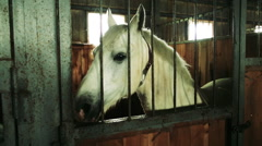 The horse in the stable Stock Footage