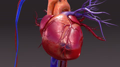 Circulatory System Infection Stock Footage
