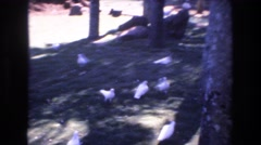 1977: birds feed walking feeding pointing enjoyment HONOLULU HAWAII Stock Footage