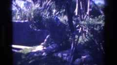 1977: animal outside playing and hanging from a tree HONOLULU HAWAII Stock Footage