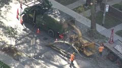 City maintenance workers feeding cut tree branches to a wood chipper Stock Footage