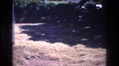 1977: early spring yard with mostly brown grass near a tree line HONOLULU HAWAII Stock Footage