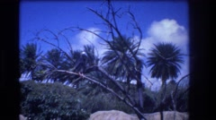 1977: meditation park with ornamental plants and a bird in the tree HONOLULU Stock Footage