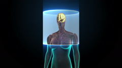 Scanning Brain in female body. X-ray view. HD. Stock Footage