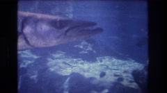 1977: fish in the clean water tank swimming freely above rocks and reefs Stock Footage