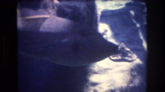 1977: several fish swimming quietly in a space with rocks and some marine Stock Footage