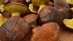 Forest mushrooms, Suillus. Stock Footage