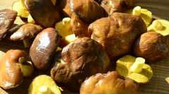 Forest mushrooms, Suillus. Background from mushrooms. Stock Footage