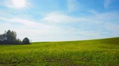 Field of blooming rapeseed, pan Stock Footage
