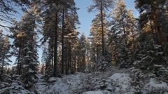 Slow wide angle lens tilt through a snowy forest Stock Footage