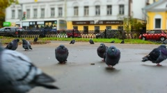 Pigeons In The Park - Miniature Effect Stock Footage