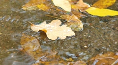Closeup of maple leaves at the autumn drifting on water Stock Footage