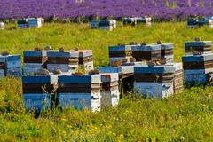 Beehives in Provence at France Stock Photos