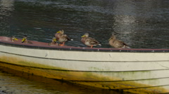 Five birds with green beaks on the boat Ireland Stock Footage