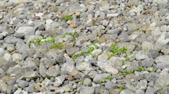 Lots of stones in an area in Carrowmore Megalithic Cemetery Ireland Stock Footage