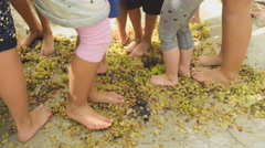 School kids learning how to make wine by stepping on top of grapes. Stock Footage