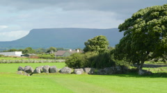 Gtreen pasture and a big tree in Carrowmore Ireland Stock Footage