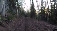 Mountain trail pine aspen forest Recreation POV HD Stock Footage