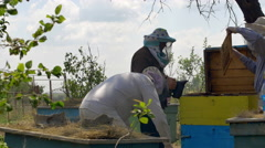 Three beekeepers are checking of all details in their beehive Stock Footage