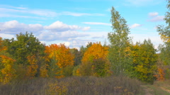 Scenic autumn landscape with colourful trees, grass and other vegetation on a Stock Footage
