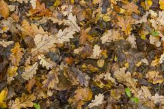 Colorful and bright background made of fallen autumn leaves. Stock Photos