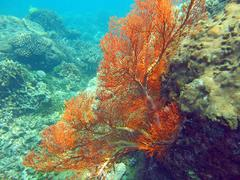 Thriving  coral reef alive with marine life and shoals of fish, Stock Photos