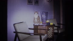 1966: cat sitting on table HOBOKEN NEW JERSEY Stock Footage