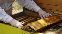 Beekeeper hands gently removes bees from the frame Stock Footage