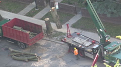 City maintenance workers loading cut tree trunks at the back of a truck, Toronto Stock Footage