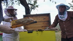A beekeeper inspects a hive of bees Stock Footage