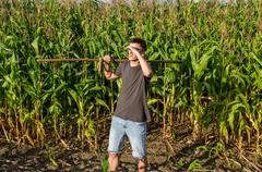 Man mowing old fashioned way with a scythe in shorts and a t-shirt in a cornf Stock Photos