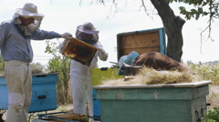 Three beekeeper stand near the hive and select the bee frame Stock Footage