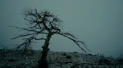 4K dead tree on ravaged forest in overcast foggy weather Stock Footage