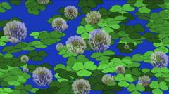 4k Clover dandelion germination lawn grass vegetation plant background. Stock Footage