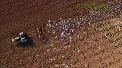 Stunning aerial view of seagulls feeding on worms behind tractor Stock Footage