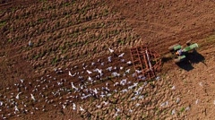 Stunning aerial view of seagulls feeding on worms behind tractor. Stock Footage