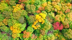 Looking down on amazingly beautiful autumn colors, aerial drone flyover view Stock Footage
