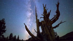 MoCo Astro Timelapse of Milky Way & Ancient Bristlecone Pine Tree  Stock Footage