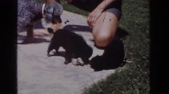 1962: two puppies are applying with a bigger dog and their toy Stock Footage
