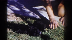 1962: two black puppies lying on grass someone playing teasing cute fluffy YORBA Stock Footage